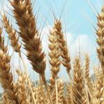 地域の農産物と特産品