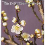 JAつやま広報誌「シャイン」2月号