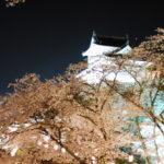 津山線 夜桜列車「ノスタルジートレイン」
