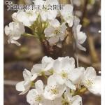 JAつやま広報誌「シャイン」4月号