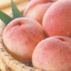 桃の収穫感謝祭 開催!
